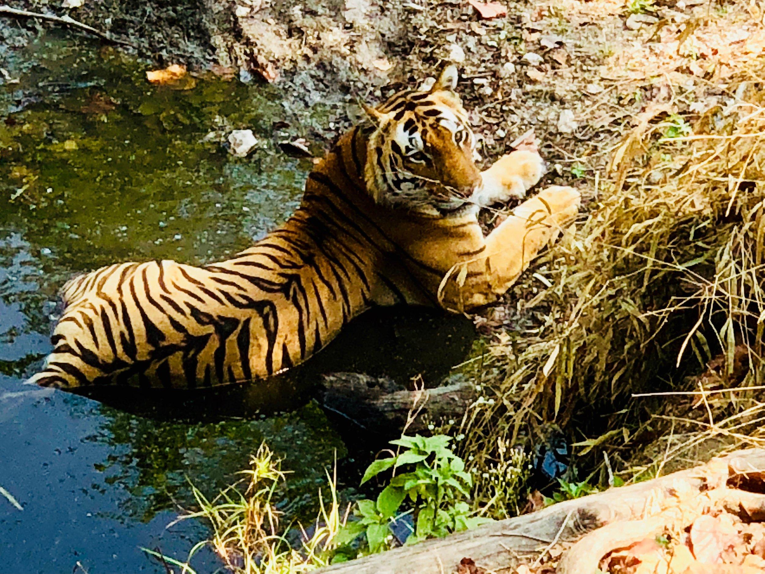 Yoga and Safari Retreat India Heena.jpeg