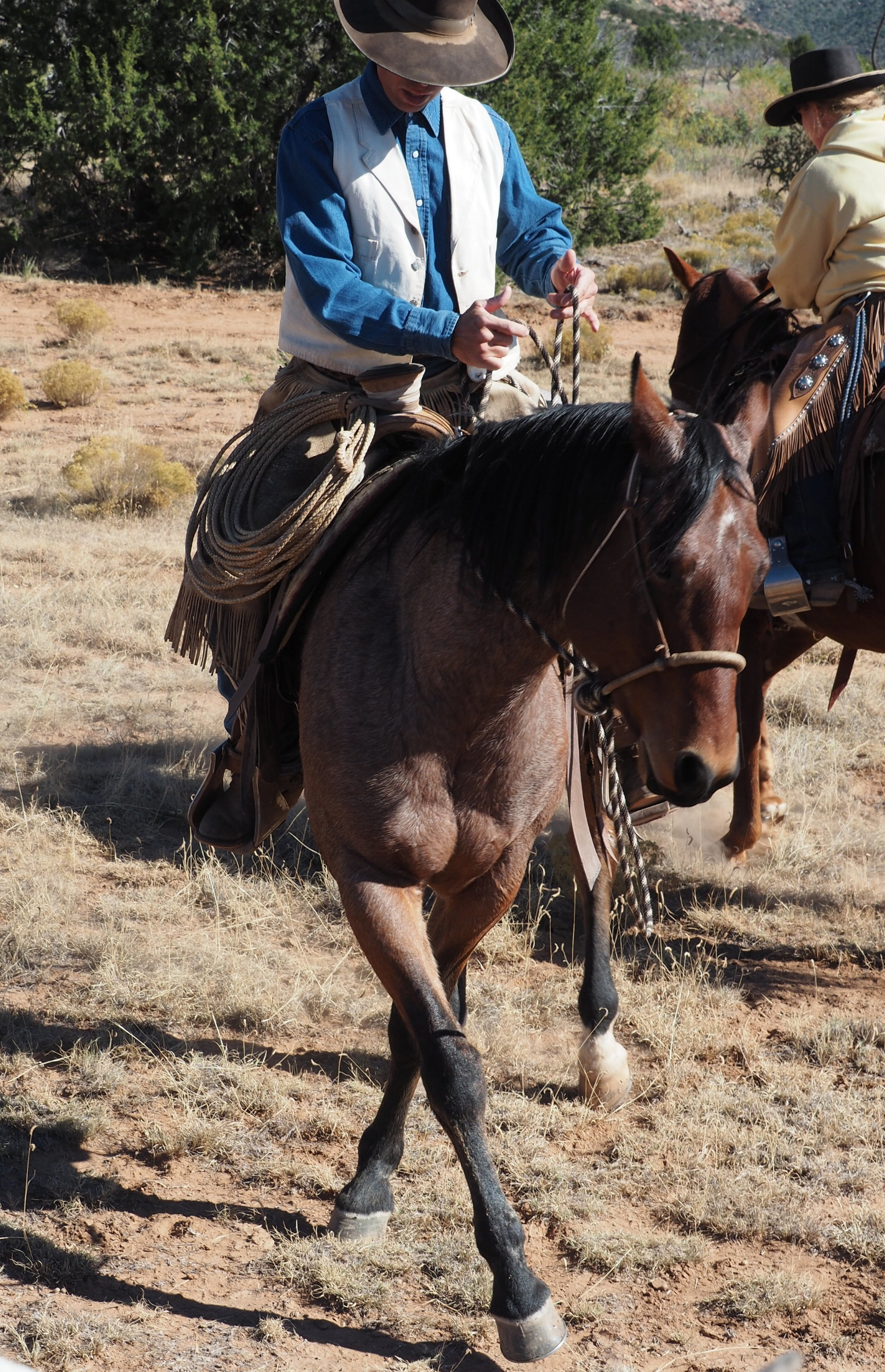 What We Do: - The Derby Livestock Company specializes in bridlehorses started and ridden in the vaquero traditions of jaquima a freno - hackamore, two-rein, spade; teaches using a balance/signal approach to horsemanship; and breeds quality Quarter Horses, Lusitanios, and Aztecas.You can also join the Derby Livestock Company Facebook page for the latest updates