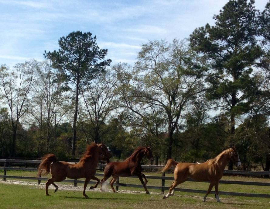 3 horses running.jpg