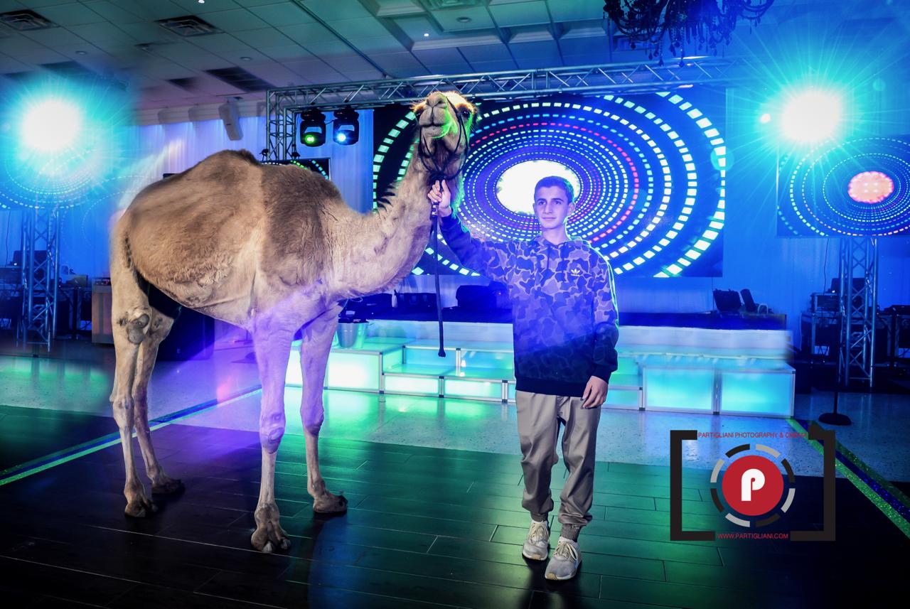 Camel in the ballroom at Lavan Venue Fort Lauderdale!