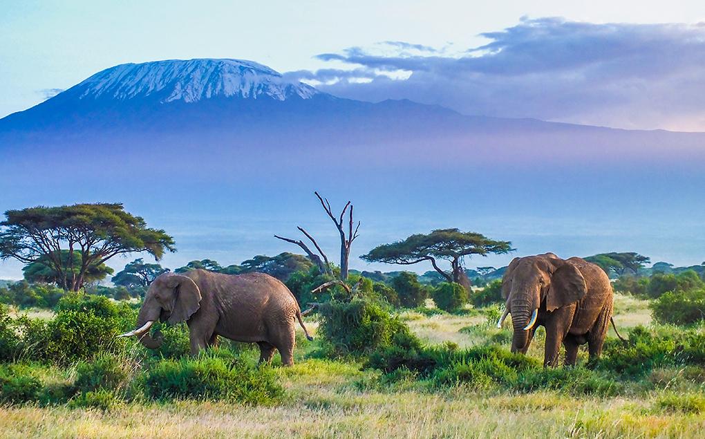 Tazania-Safari.jpg