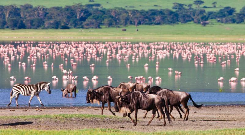 africa_tanzania_ngorongoro_zebras_and_wildebeests_in_the_ngorongoro_crater_flamingos_in_the_background_0.jpg