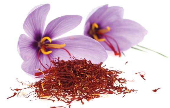 crocus sativus flower
