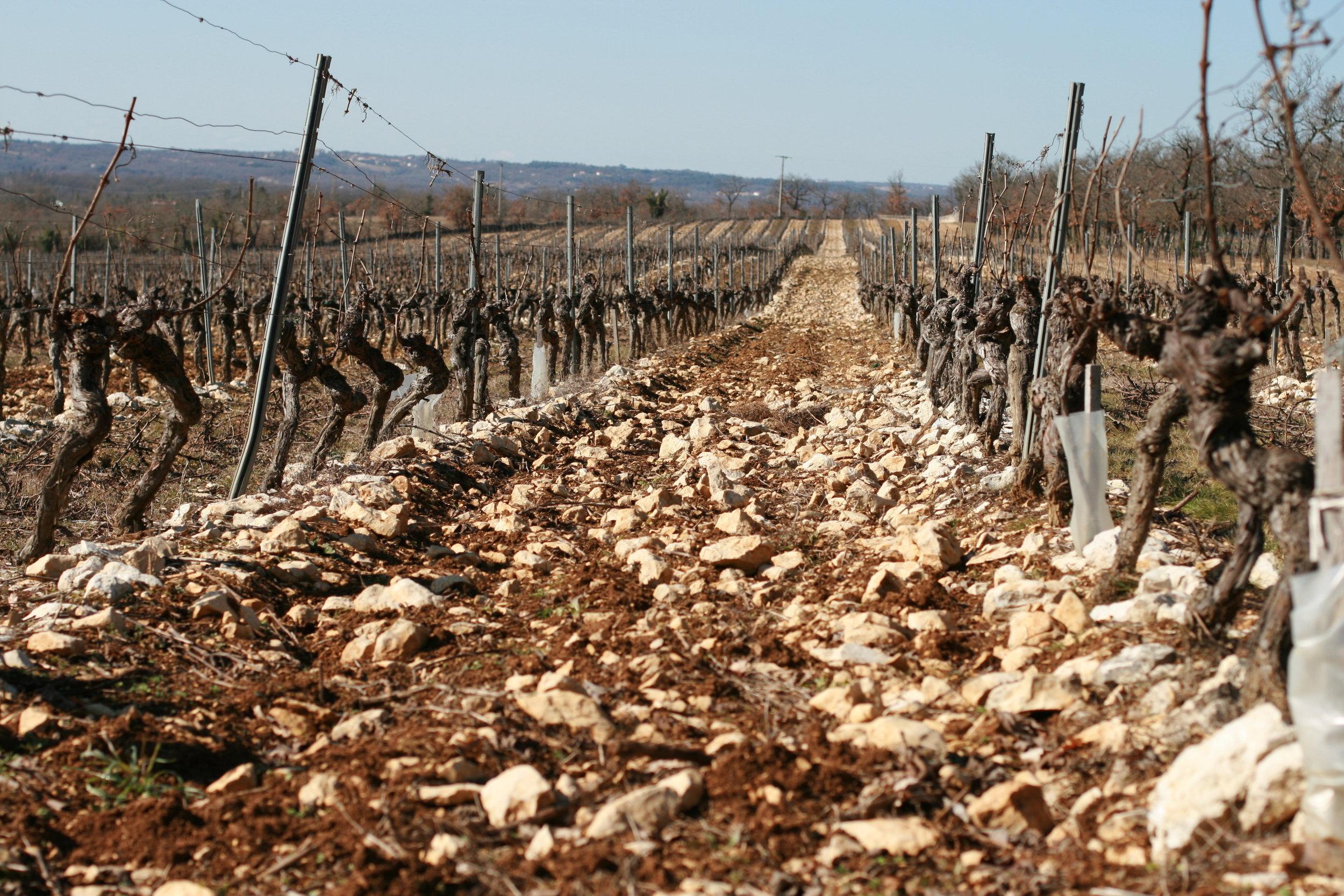 Crocus Plateau Vines