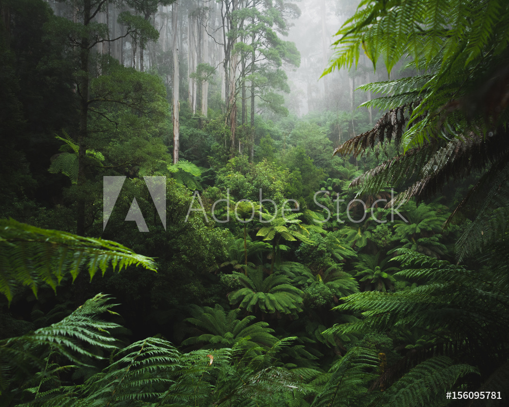 AdobeStock_156095781_Preview.jpeg