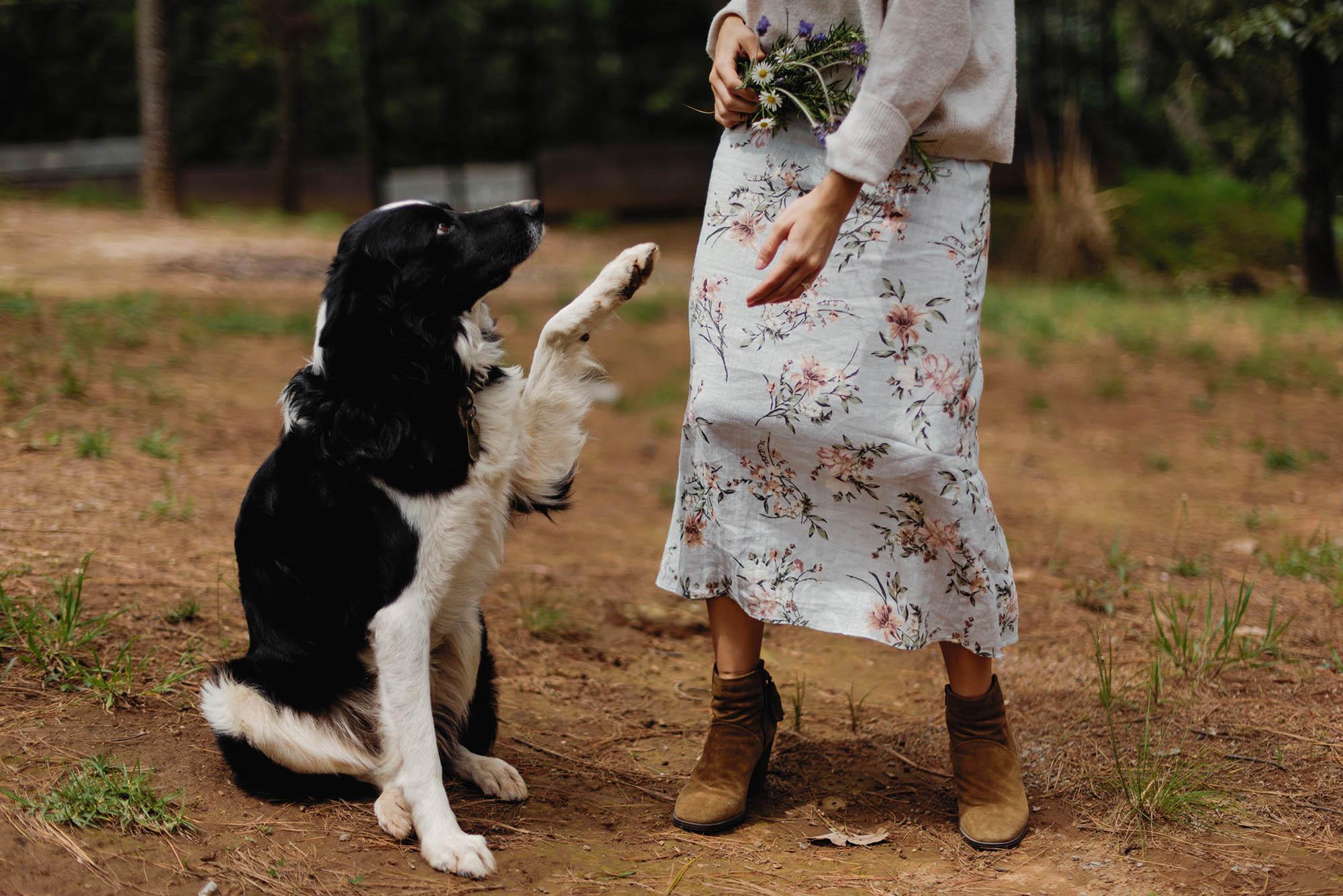 magali espinosa bosque tapalpa wedding destination photographer 21-WEB.jpg