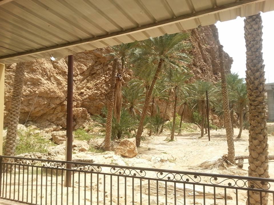 Palm trees Israel.jpg