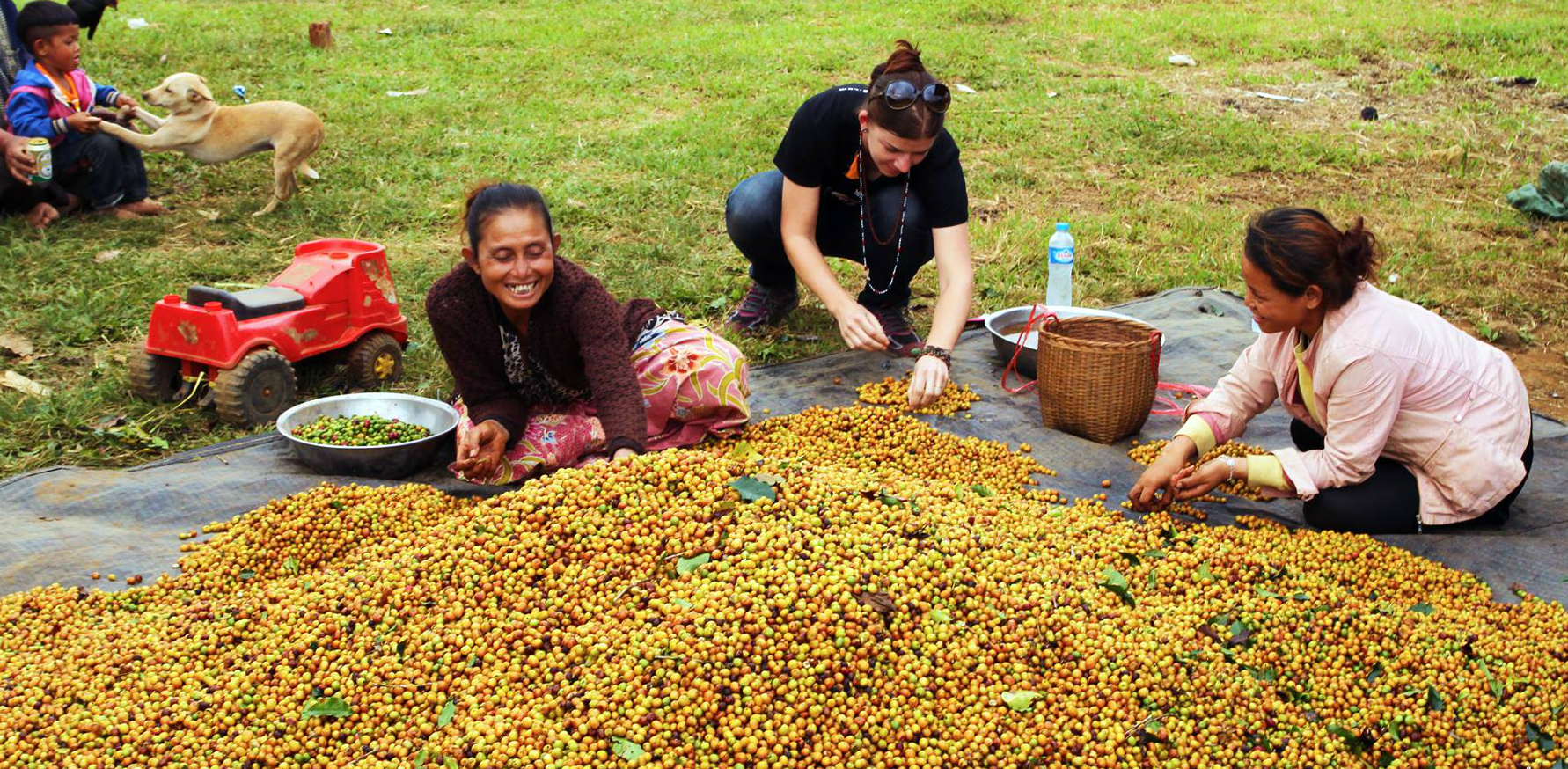 Cana (middle, Filanthrope), assisting Nong Kali village with the day's harvest