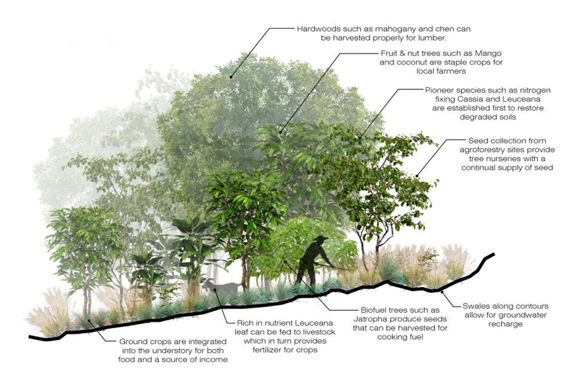 An example of diversified agroforestry methods. Image courtesy  Community 2 Community