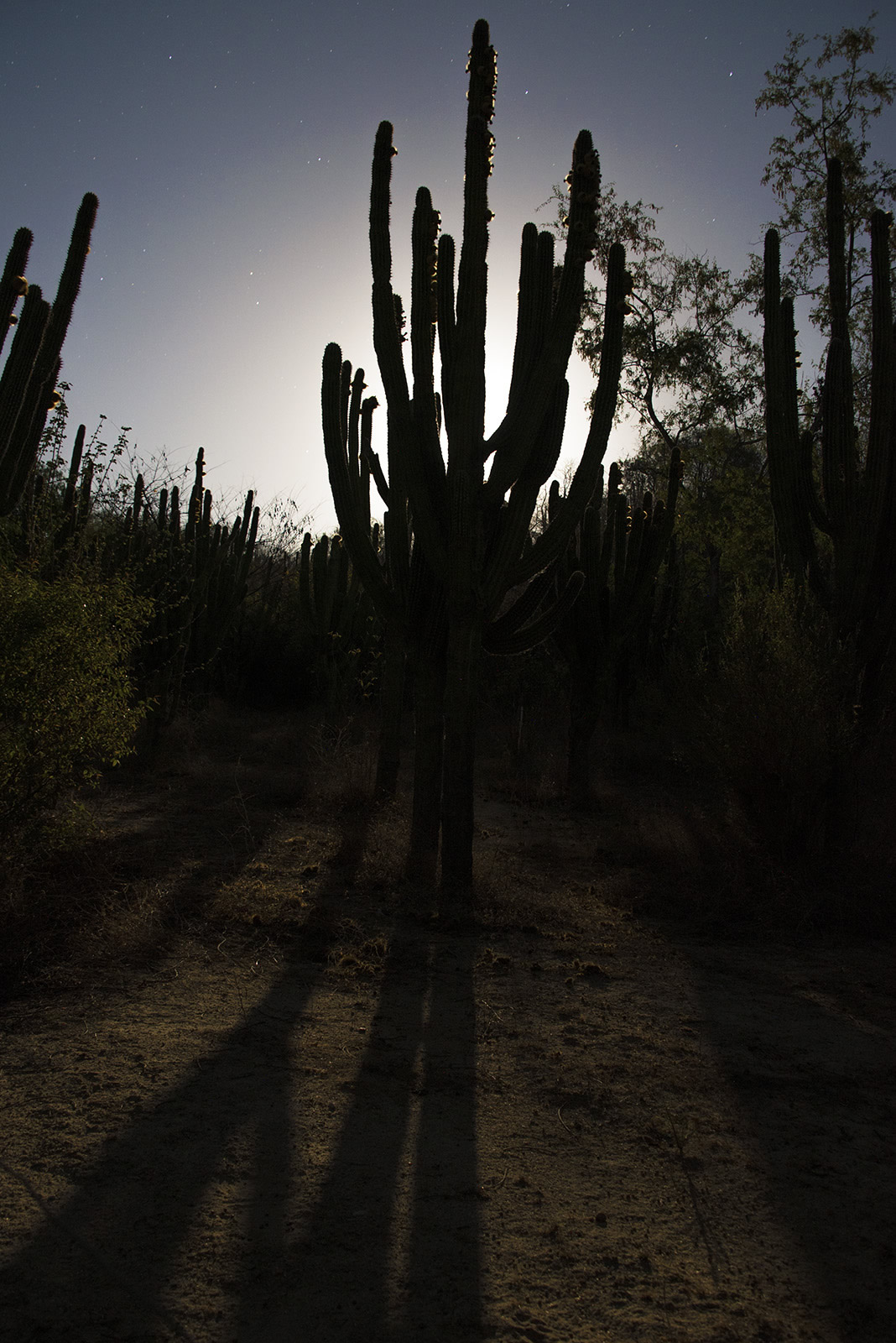 3_moon_cactus.jpg