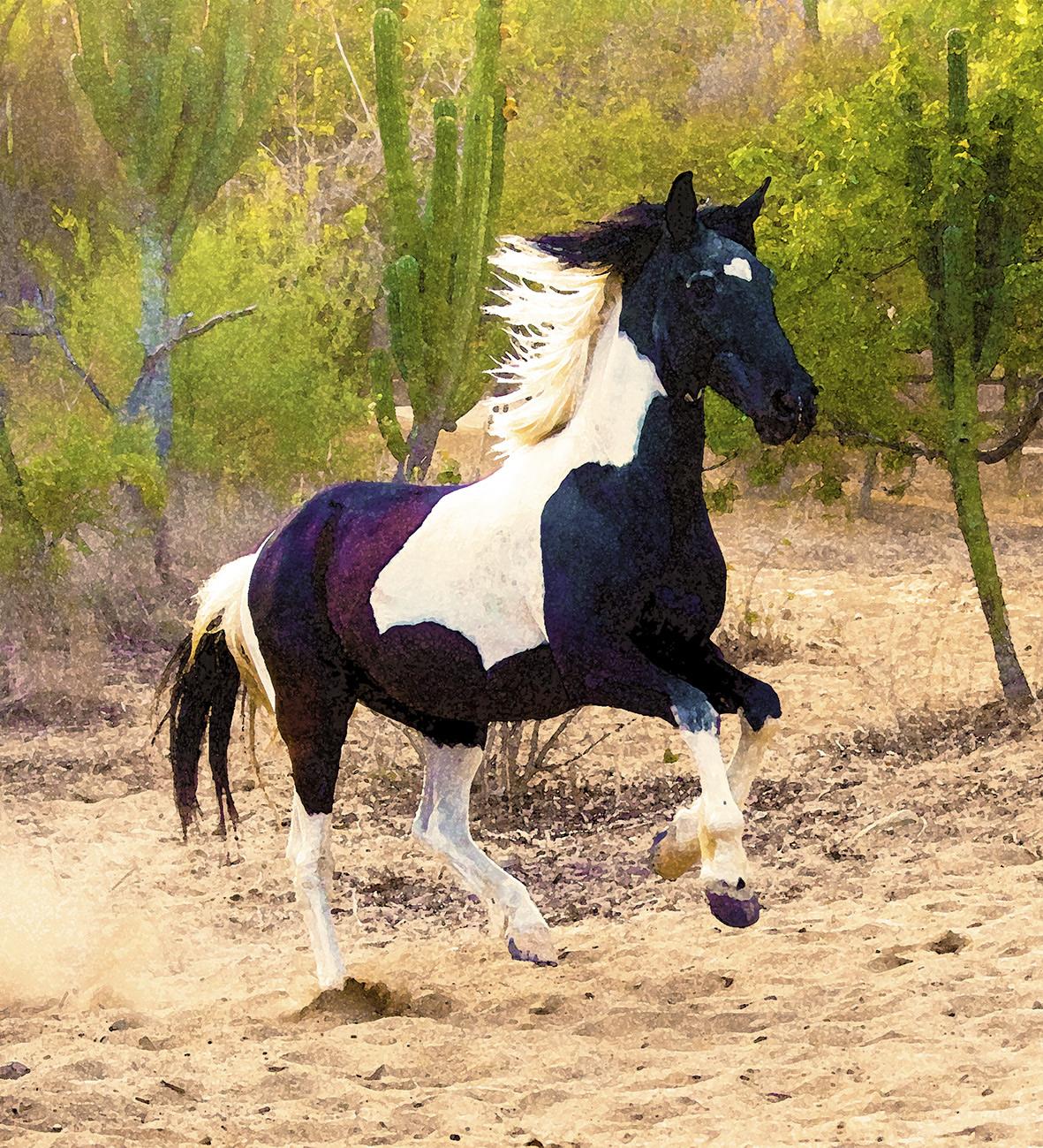 24-horse.jpg