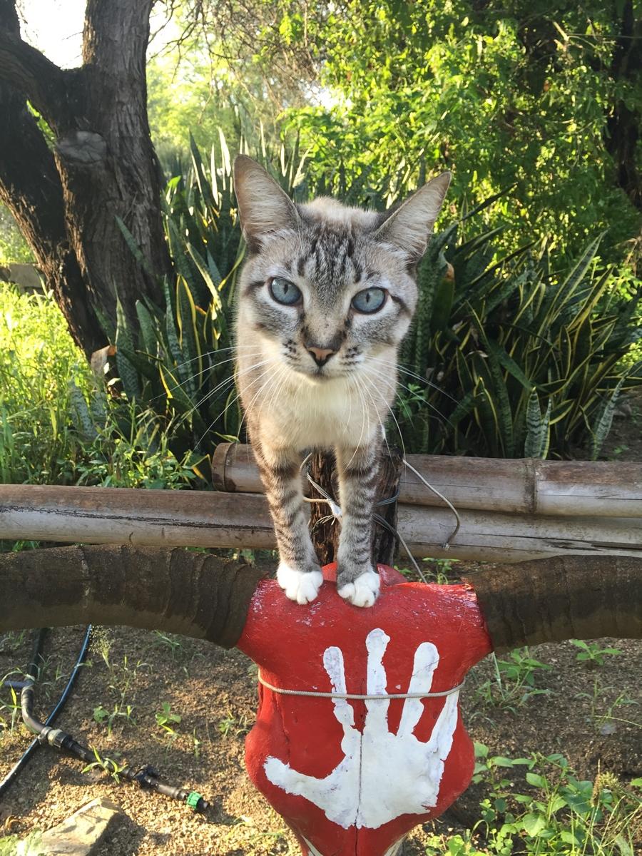 25-kitty.jpg