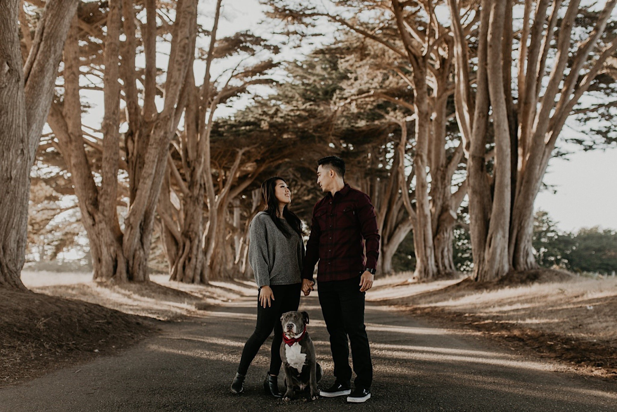 Cypress tree tunnel engagement session at Point Reyes national seashore