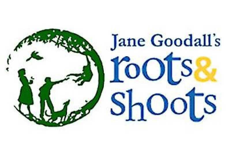 roots and shoots.jpg