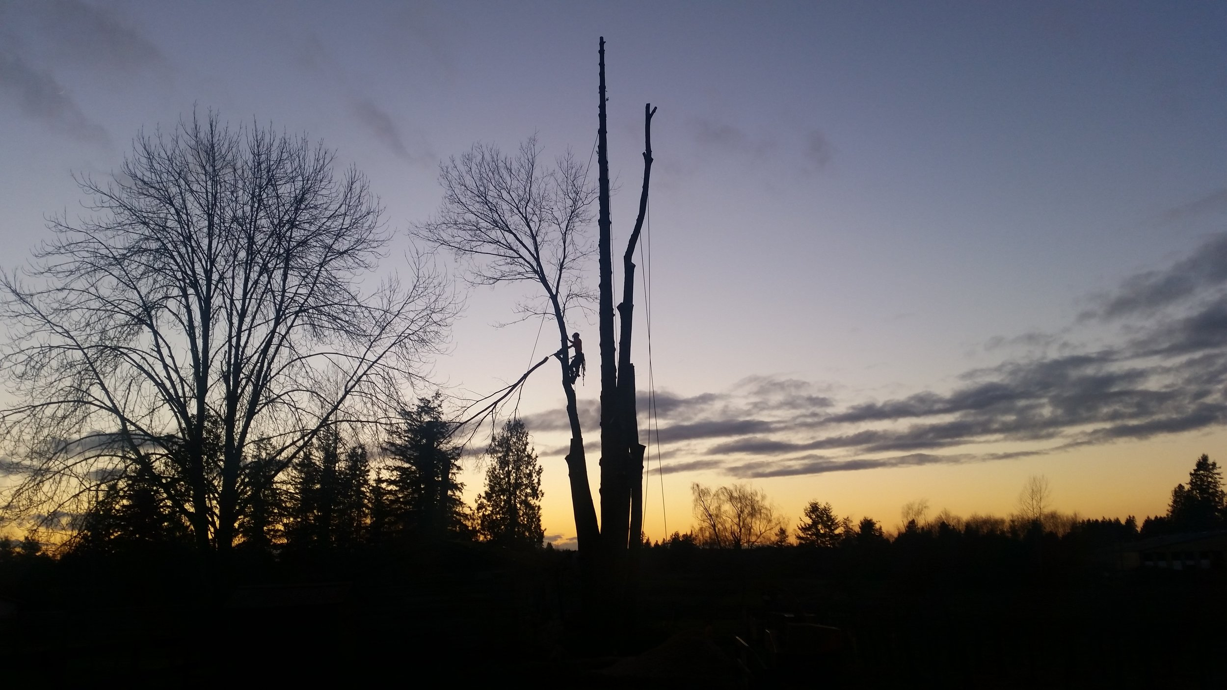sunset limb.jpg