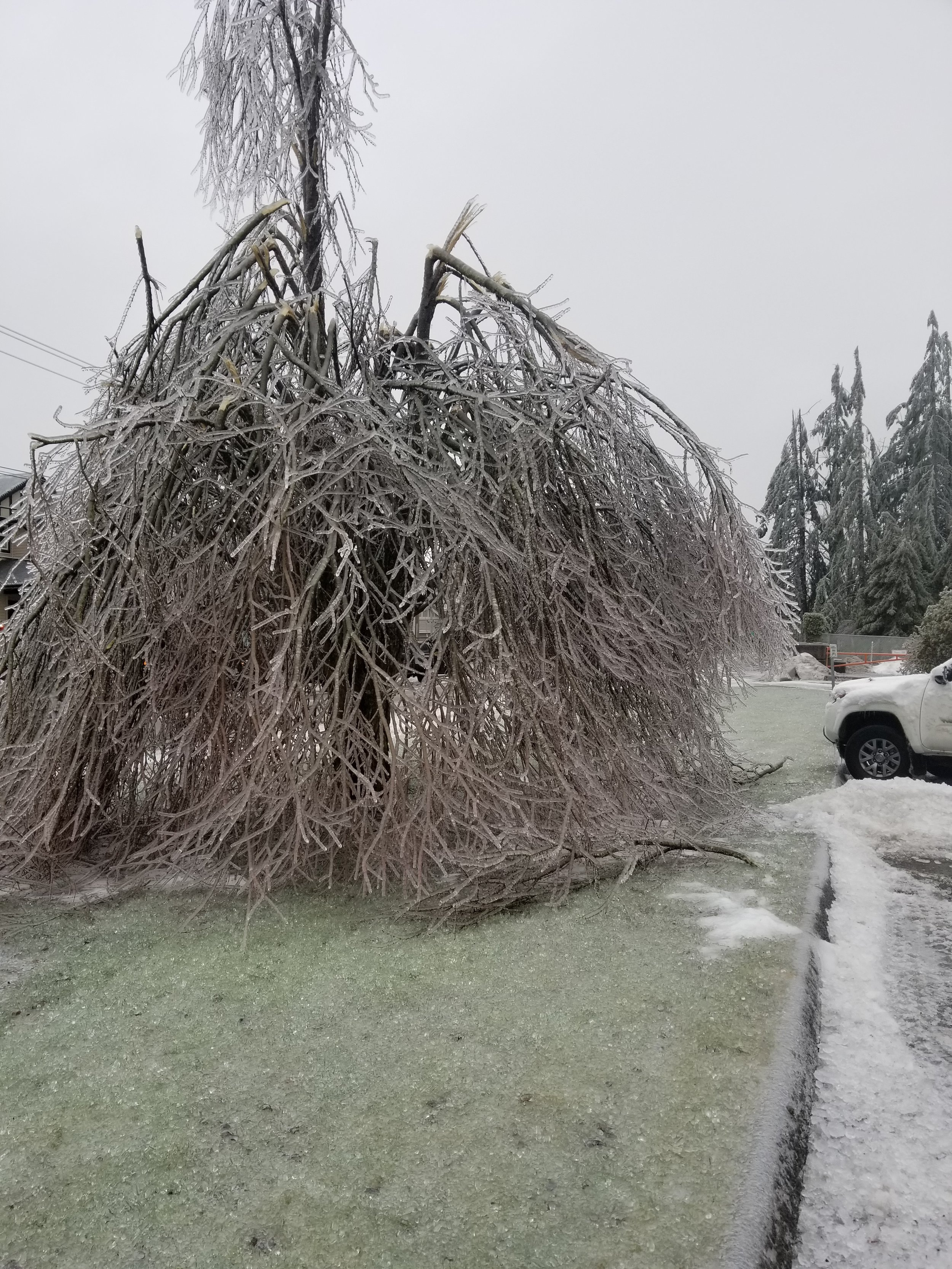 Emergency Services - We deal with all types of storm damaged trees including trees on structures. During these events it can be difficult to get in touch with us as the call volume is high. Please leave a message describing the situation in detail as we do check our messages and try to prioritize our calls.