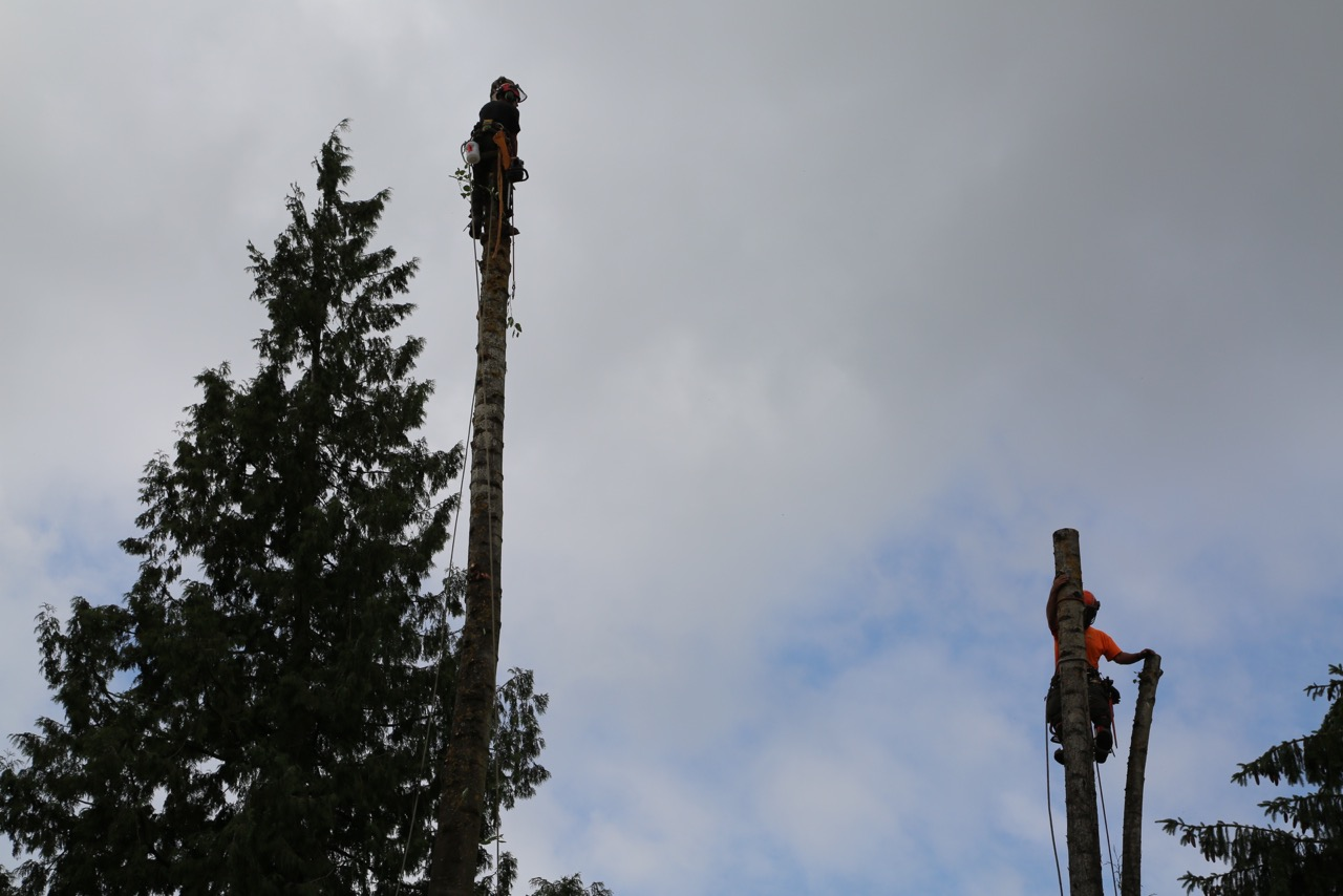 Tree Removal - Our Arborists are trained in technical, high risk removals.