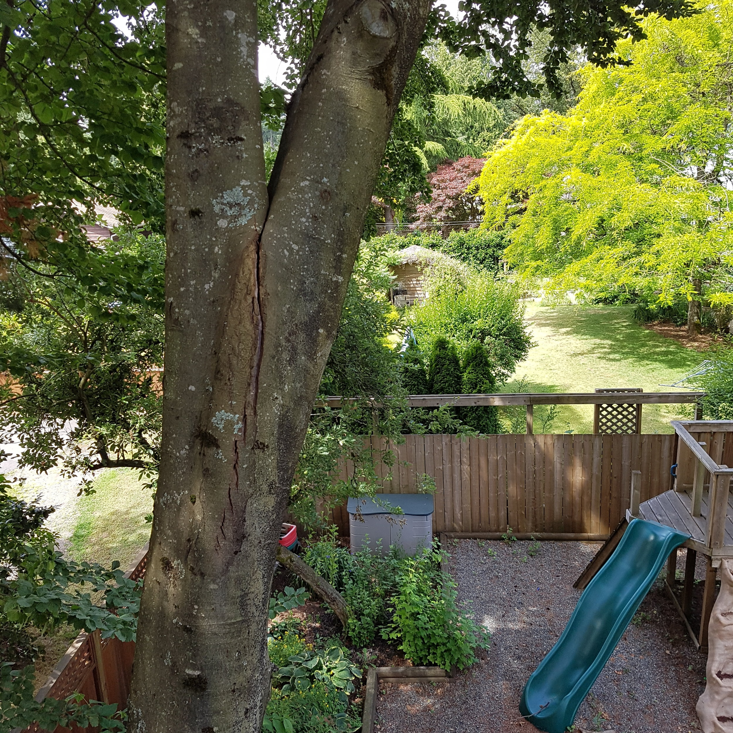 Cabling and Bracing - Sometimes a tree has a flaw that can't be addressed fully by pruning alone. We install supplemental support to reduce loading of flawed portions of a tree to help retain high value trees.