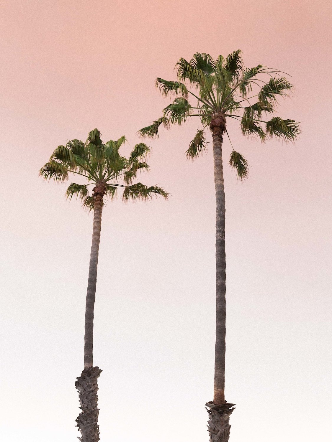 OCEAN LIGHT - Palm trees and pastel ocean light landscape photography