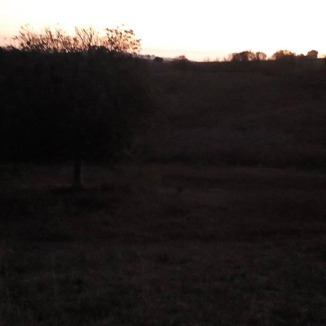 Another beautiful sunset at Farmgate #FarmgateFamily #qld #childers #australia #farmwork