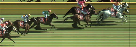 CAULFIELD Race 8 No. 8 Red Chouxs @ $9 - watch price   Result : Non Qualifier – Unplaced at SP $13.00