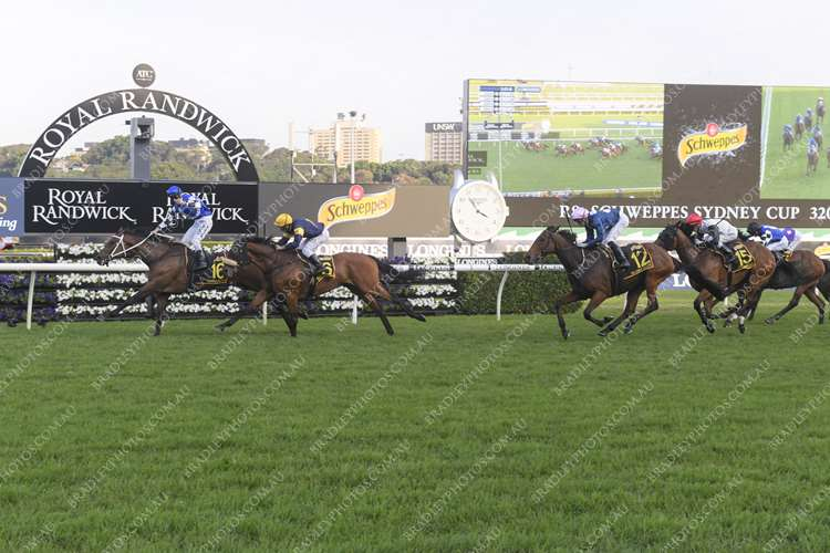 RANDWICK Race 8 No. 14 Gallic Chieftain @ $12 (watch price)   Result : Non Qualifier - Unplaced at SP $18.00