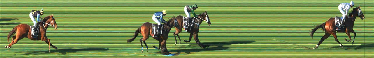 SANDOWN HILLSIDE Race 3 No. 7 Tristano   Result : Unplaced at SP $6.50. Went forward and had a share of the lead. Was beaten off at the top of the straight and went on to finish towards the tail of the field. Outcome -0.91 Units.
