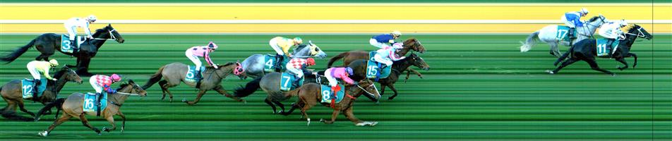 GEELONG Race 9 No. 15 Champagne Friday   Result : 3rd at SP $5.50. Settled near the front, loomed at around the 200m but a couple of the back markers had the momentum while Champagne Friday managed to hold third in a photo. Outcome -1.11 Units.