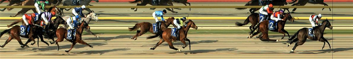 RACING.COM  SYNTH Race 3 No. 7 Ferus  Result : Unplaced at SP $9.00. Settled in a midfield position and held its position in the straight to finish midfield a number of lengths from the winner. Outcome -0.63 Units.