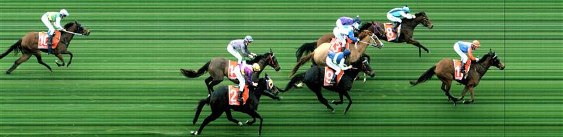 MOE Race 9 No. 8 Hapaira  Result : 2nd at SP $1.90. After trailing the leader in third, kept to the inside in the run but couldn't hold out the winner who came fast down the outside to score by a length. Outcome -1.50 Units.