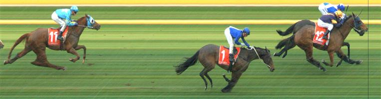 SANDOWN LAKESIDE Race 5 No. 6 Killavally  Result : Unplaced at SP $2.90. Settled midfield but seemed to be uncomfortable in the conditions and dropped out to finish towards the tail of the field. Outcome -1.50 Units.