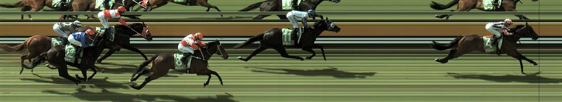 MILDURA Race 3 No. 11 Southern Native  Result : 2nd at SP $1.45. Lead until the final 100m when peaked in the run and weakened out to finish a length second. Outcome -1.50 Units.