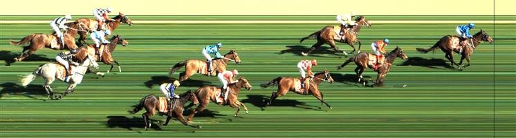 CAULFIELD Race 5 No. 9 Grey Shadow  Result : Unplaced at SP $20.00. Settled outside the leader though weakened in the final 200m to drop out to finish in the last part of the field. Outcome -0.26 Units.