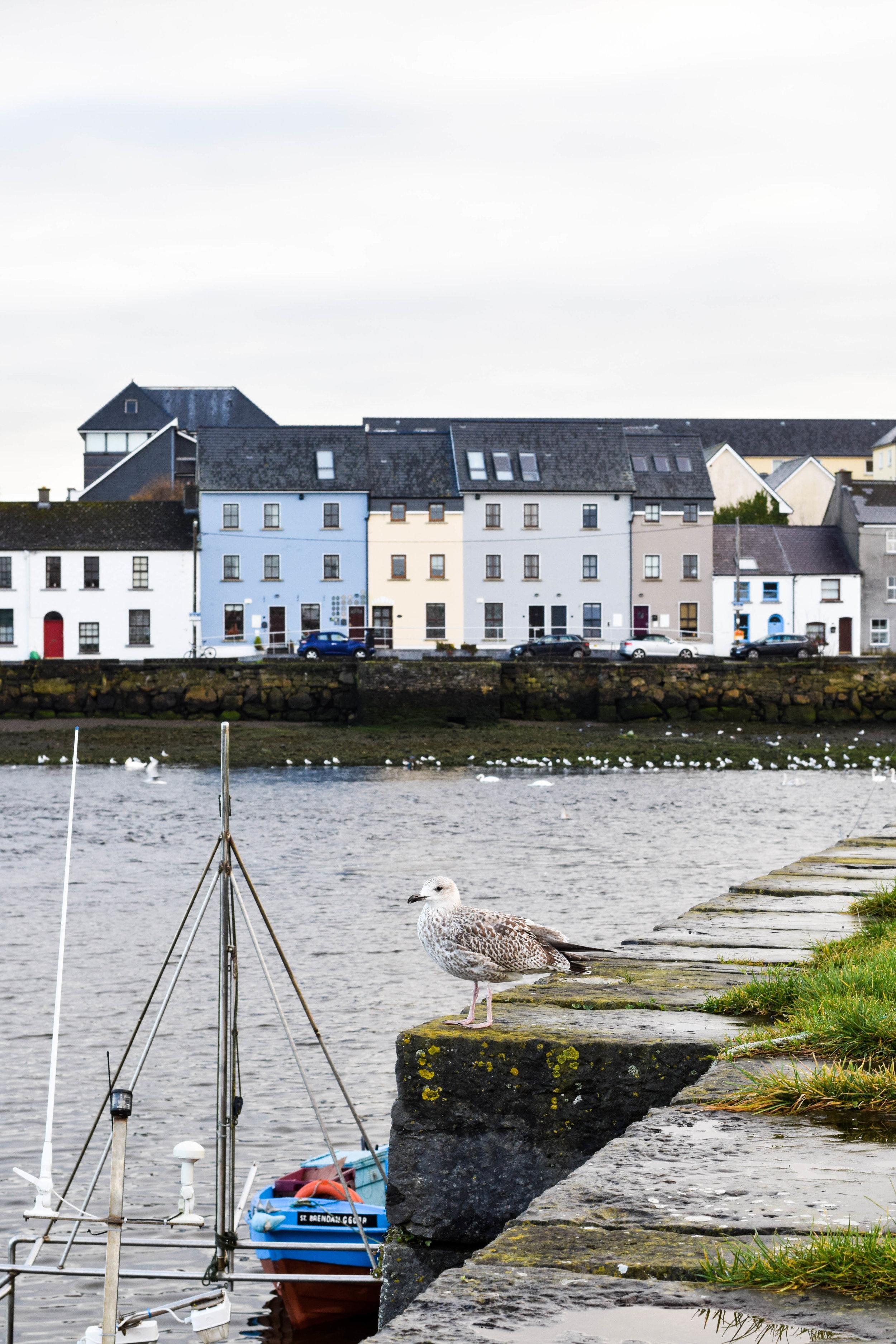 Galway-8.jpg