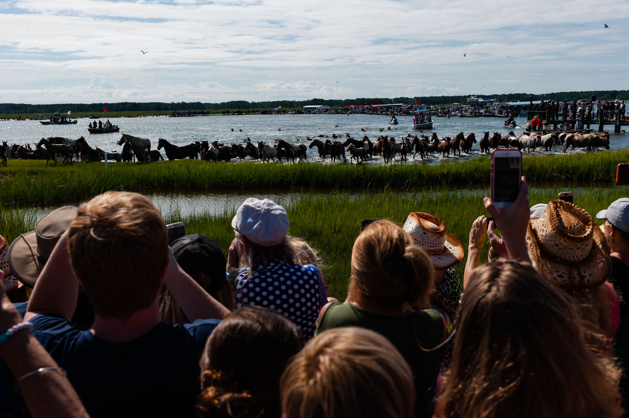 EmilyLewisCreative_20190724_Chincoteague Pony Swim-24.jpg