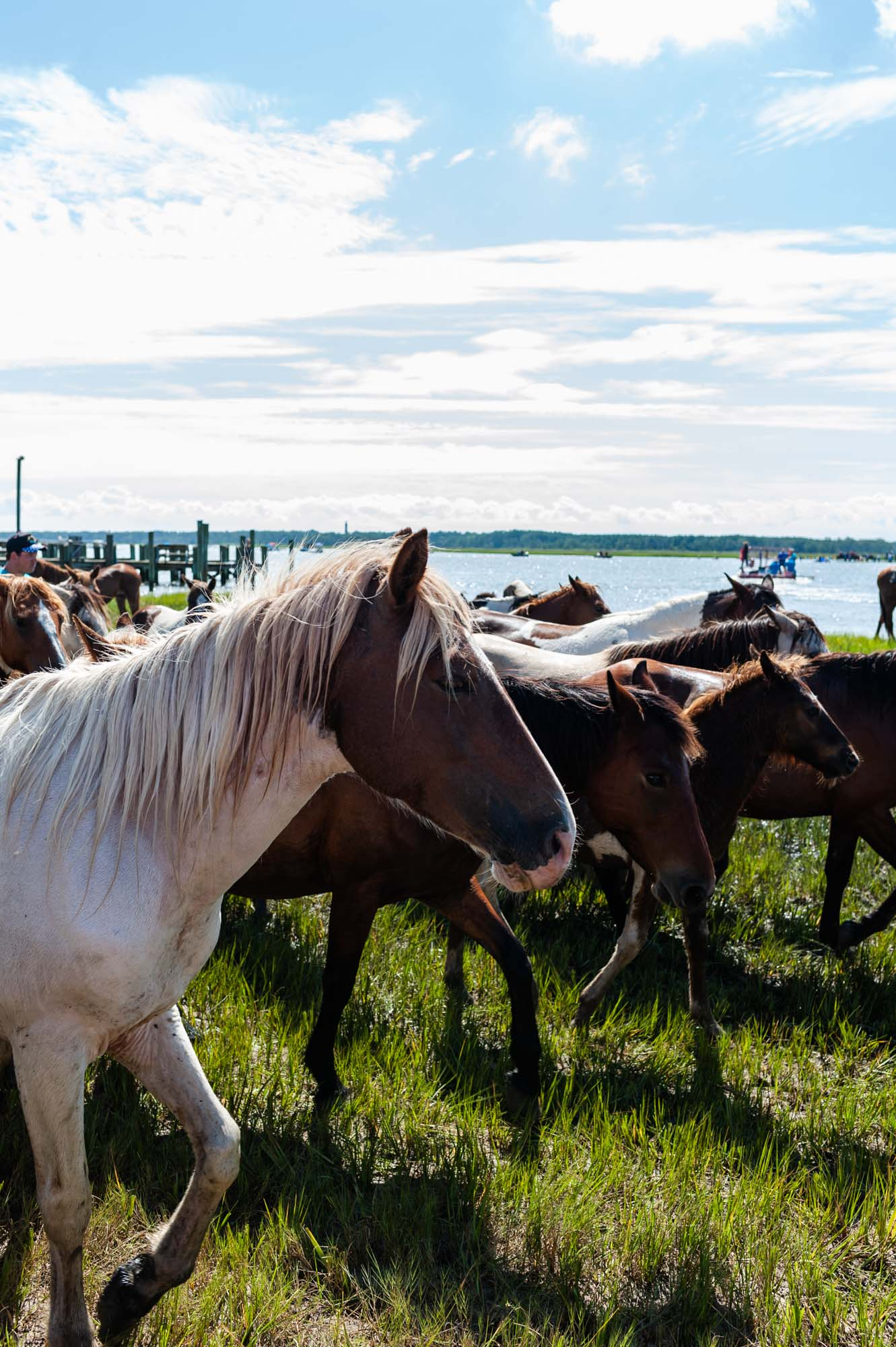 EmilyLewisCreative_20190724_Chincoteague Pony Swim-31.jpg