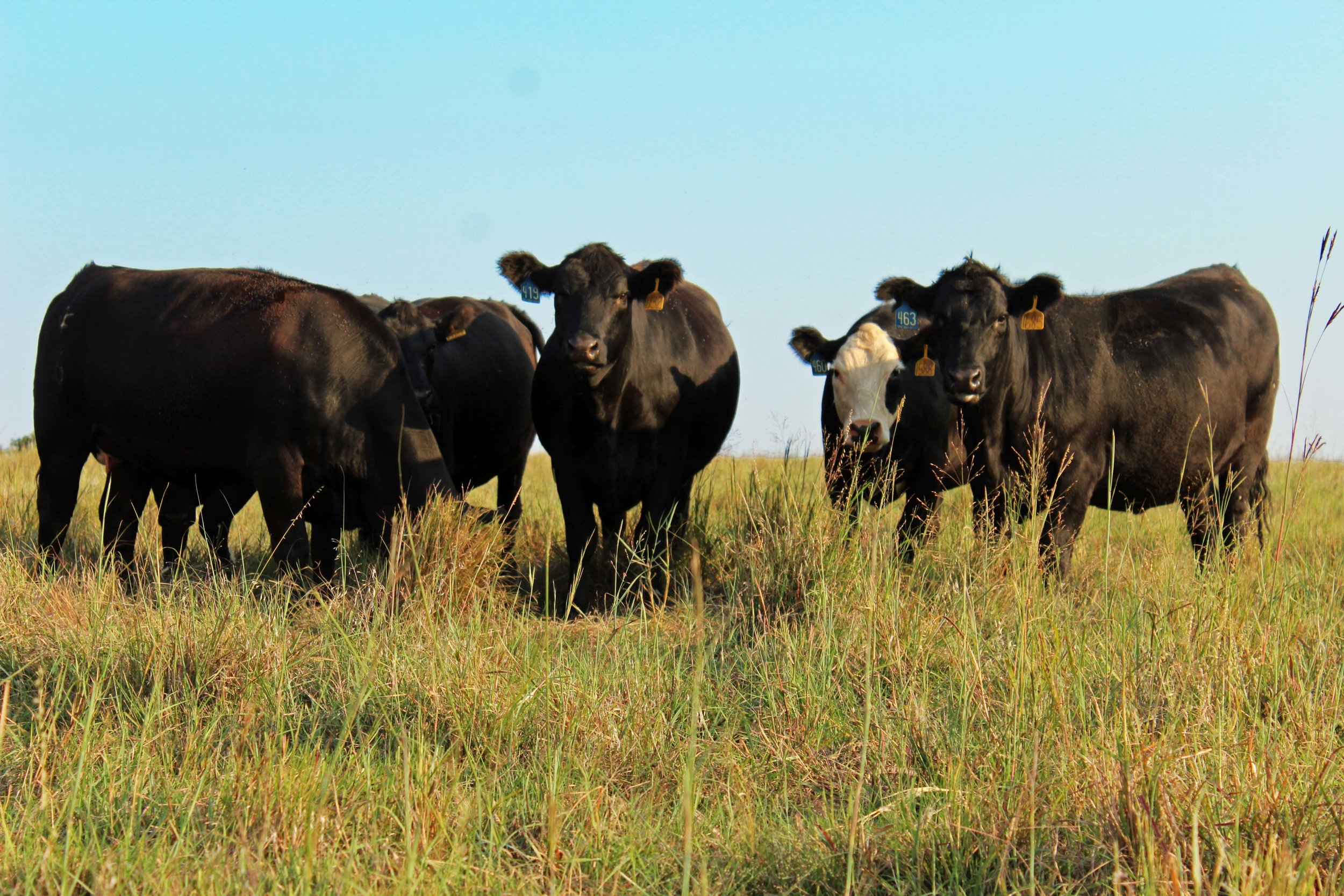 oklahoma natural beef certified natural beef 580 beef