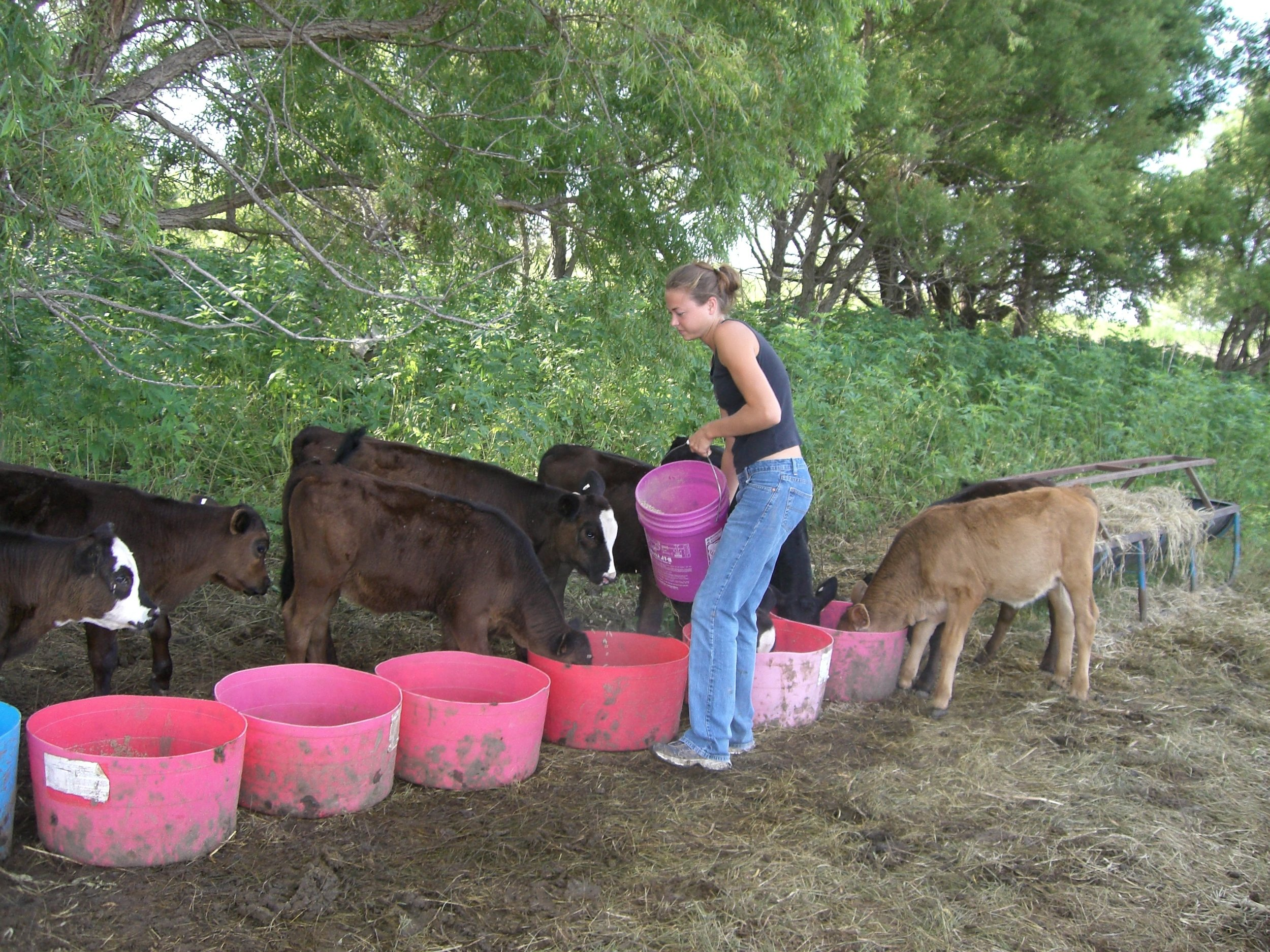 oklahoma natural beef certified natural 580 beef.jpg