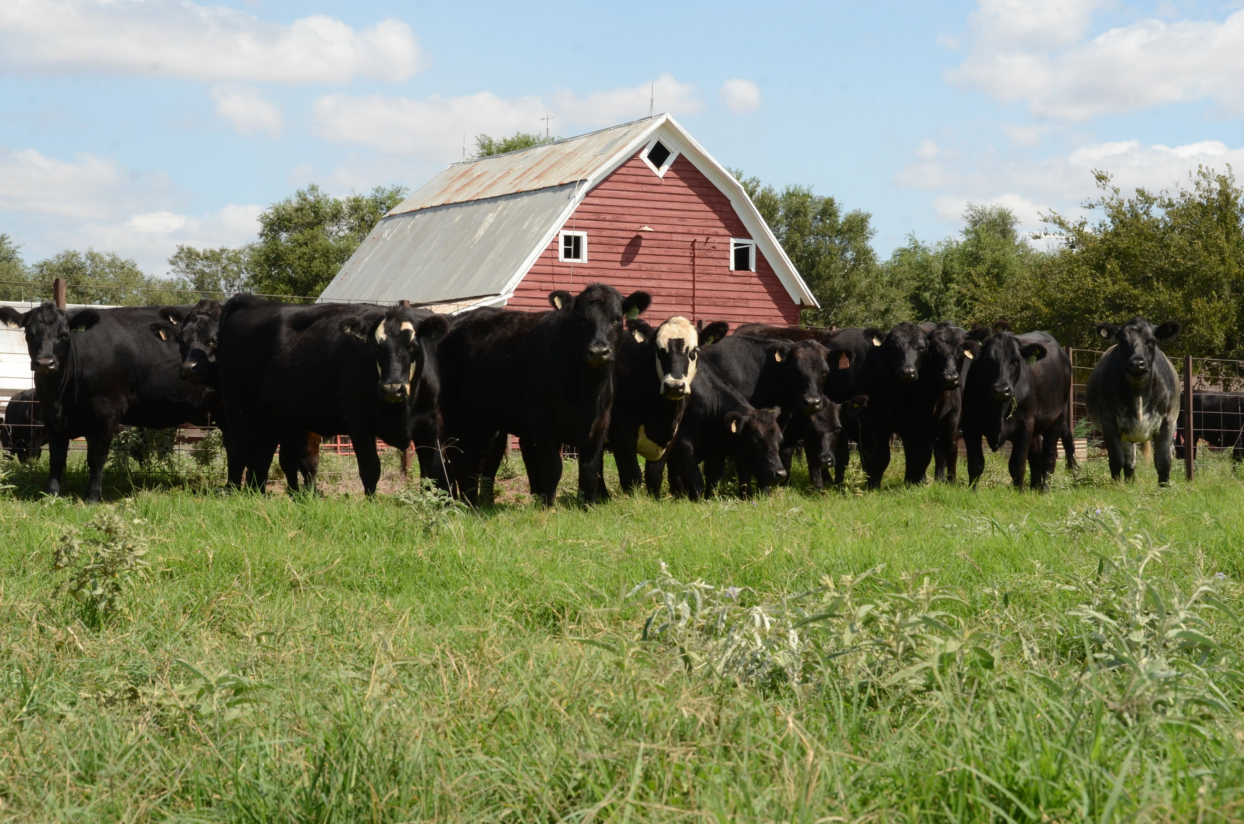 Jantz Farms.JPG