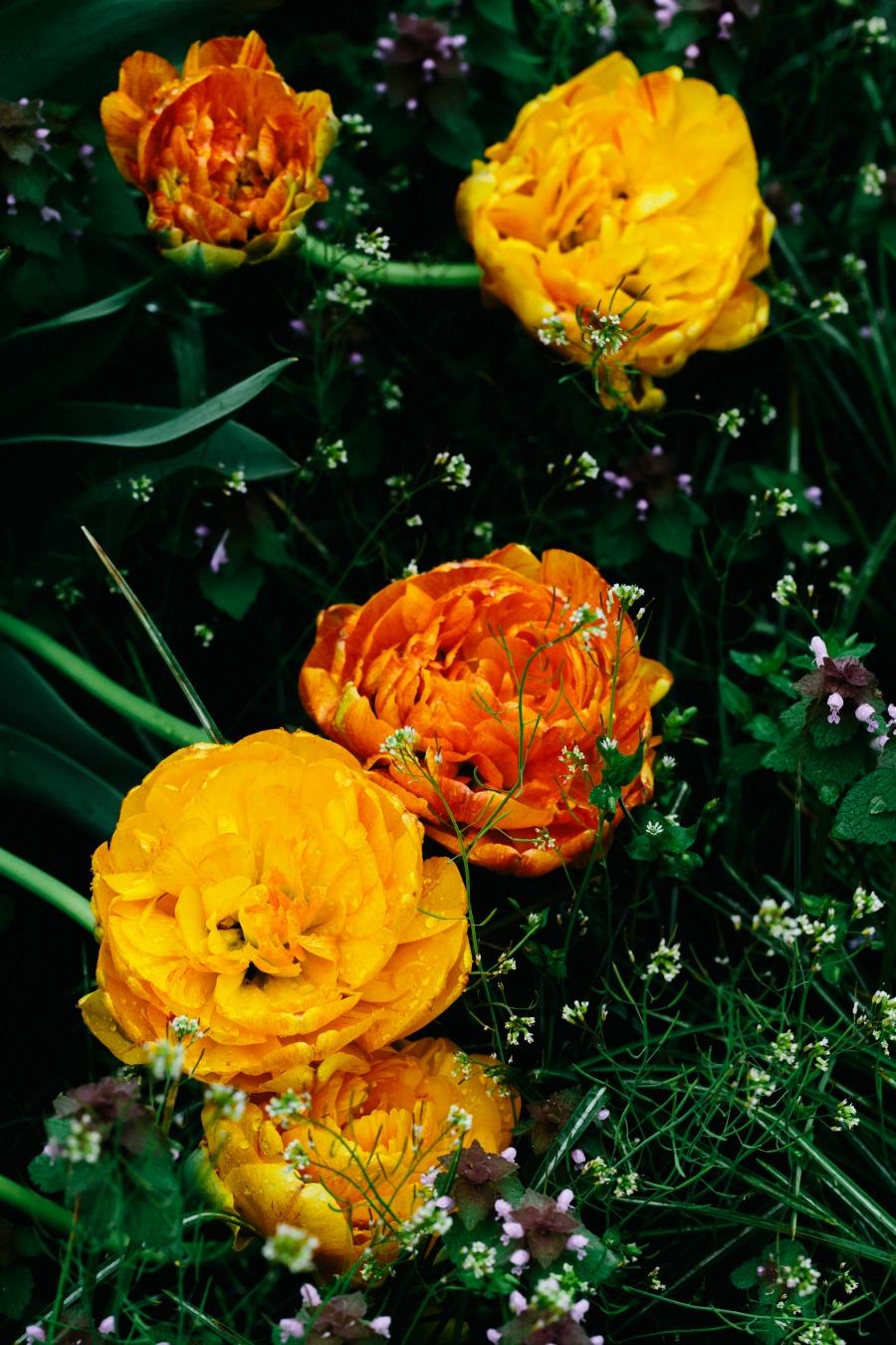 New York Botanical Garden Photographers & Wedding Photographers