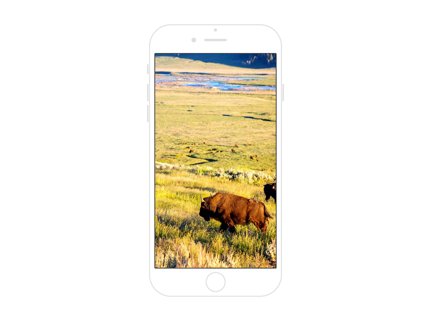 Yellowstone National Park 04