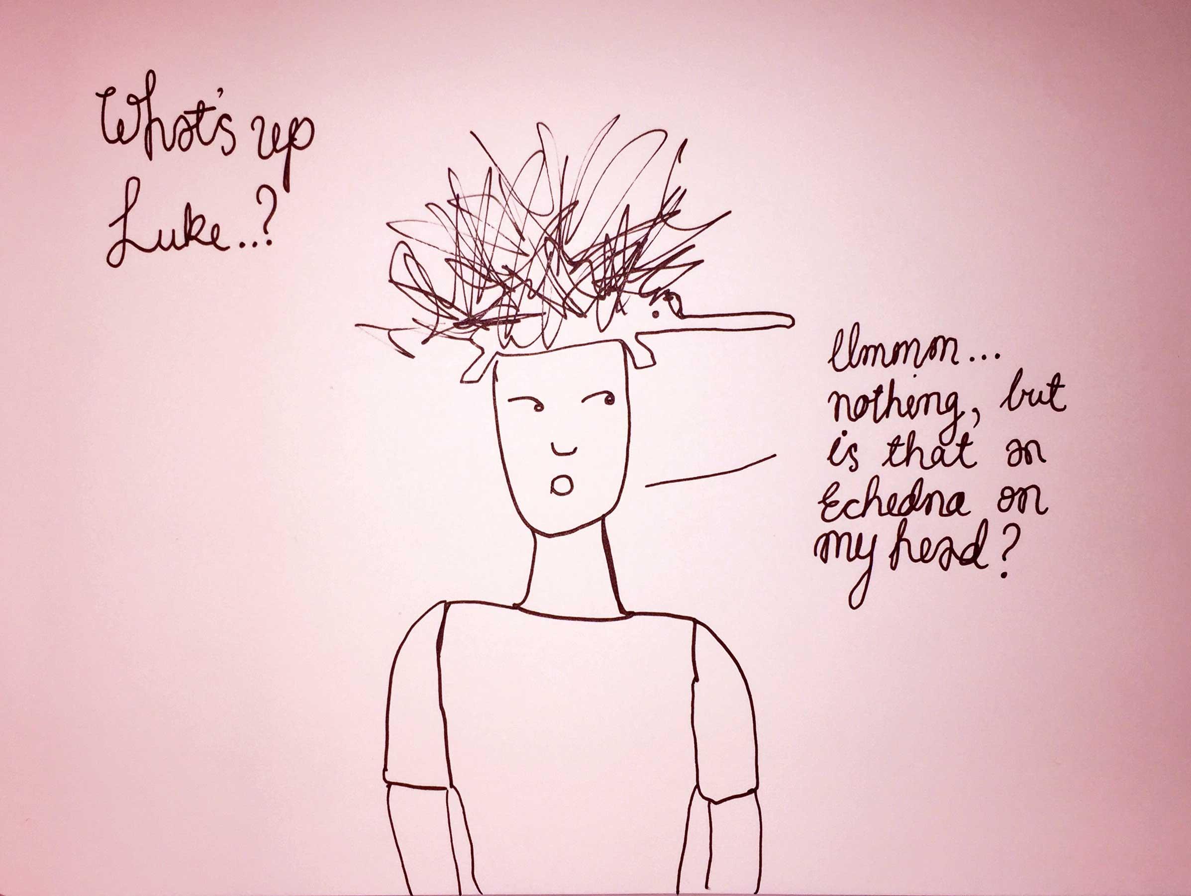 Echidna head. Drawing Luke Hockley.