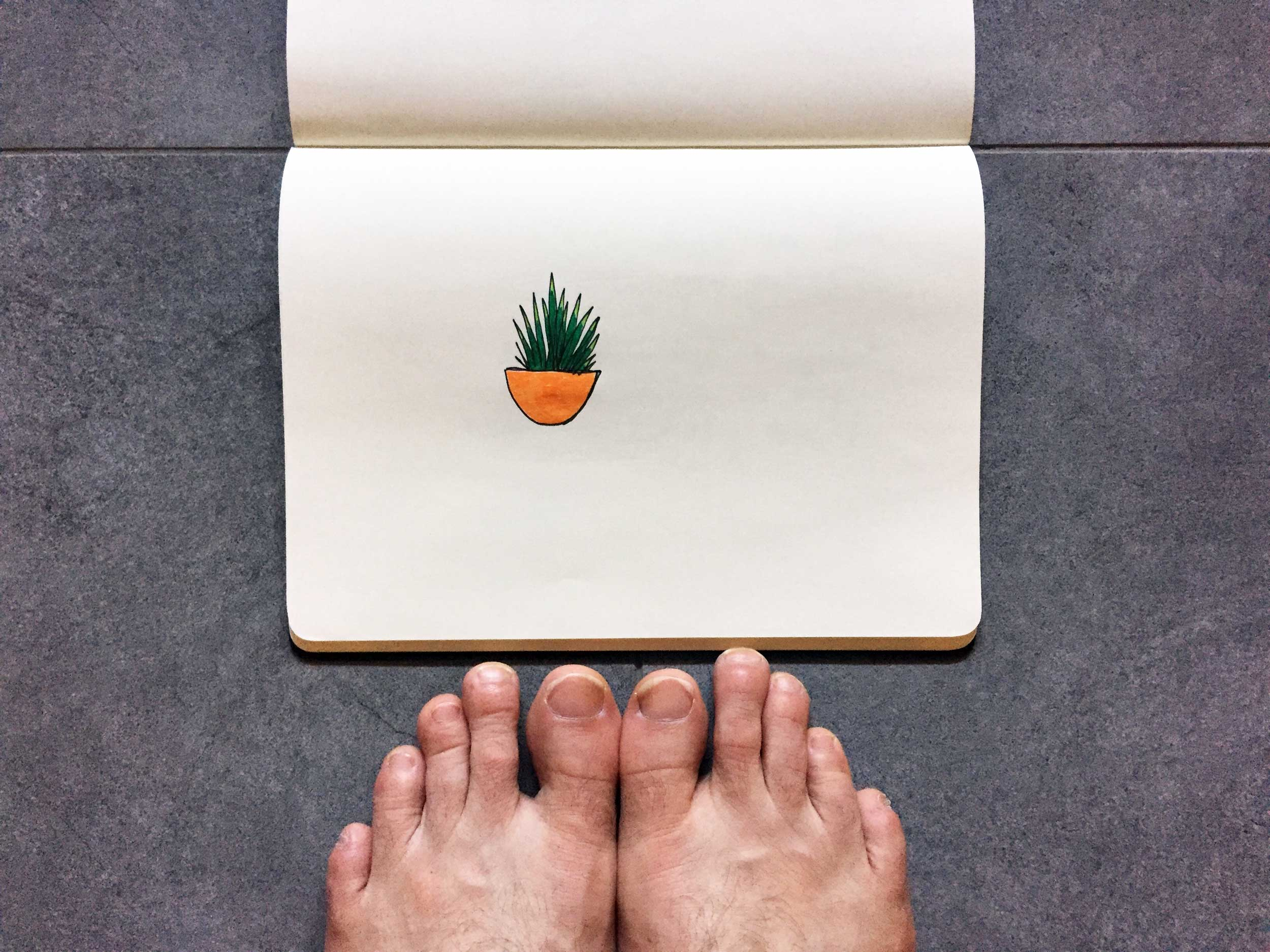 A confident cactus. Drawing Luke Hockley.