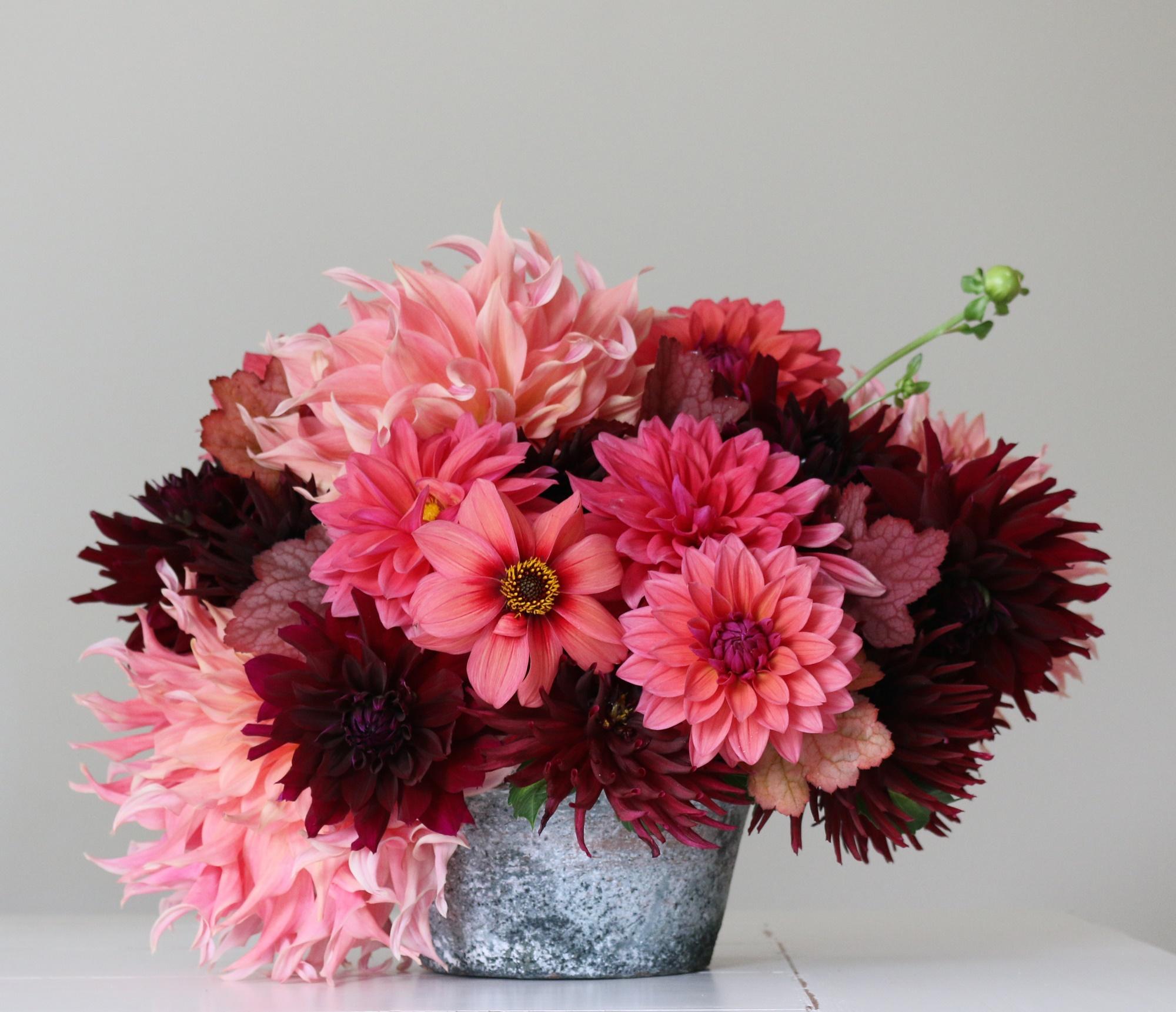 2_Flirty Fleurs Sorbetto Dahlia Collection - Longfield Gardens.jpg
