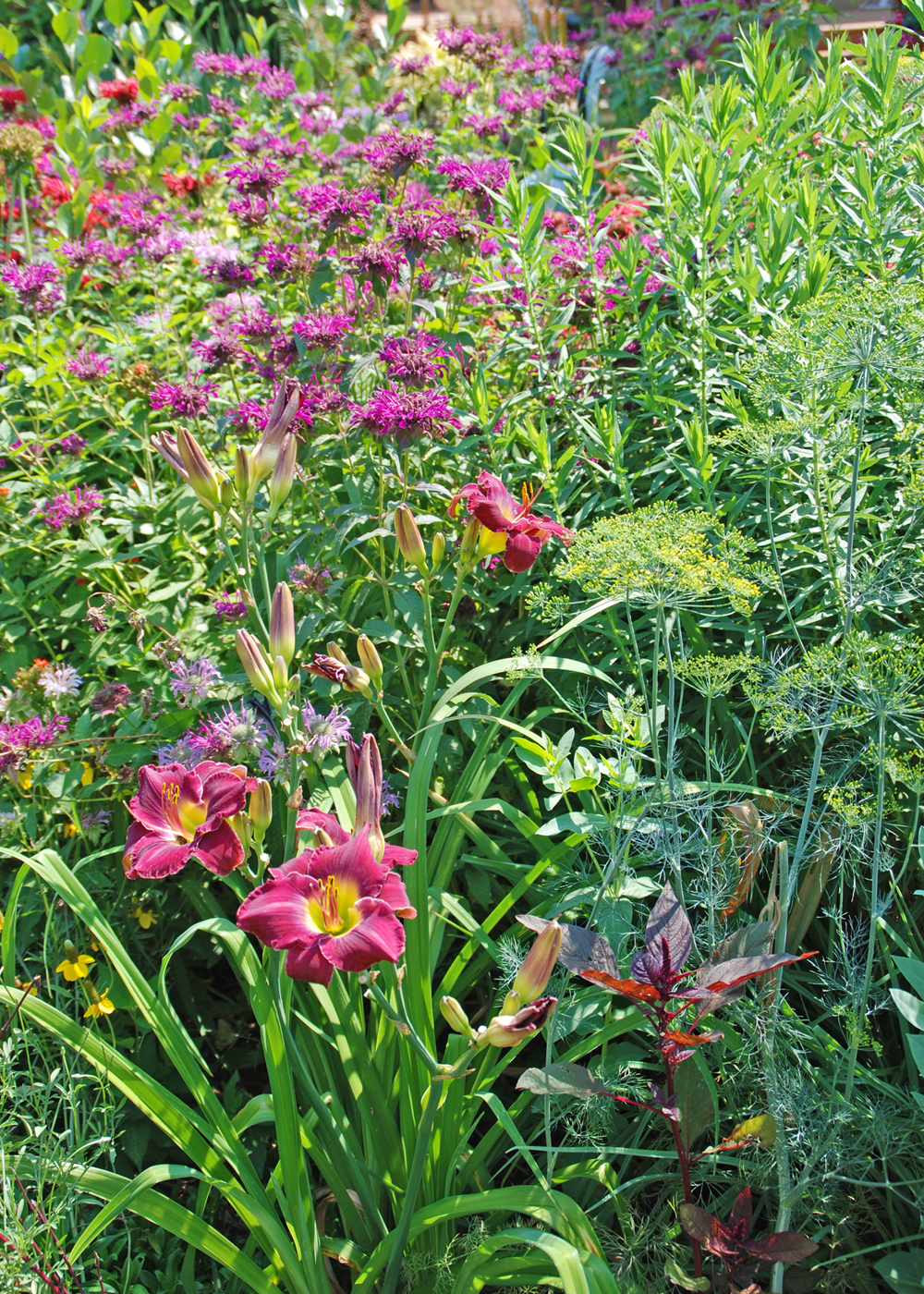 Removing spent flowers on many perennials will encourage additional bloom and keep gardens looking their best. Photo by Melinda Myers, LLC