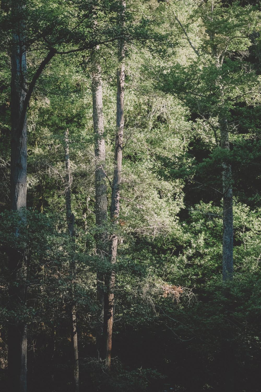 DSCF4536.jpg