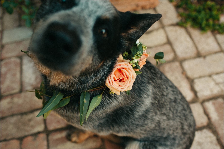 castlemaine-wedding-photography_0012.jpg