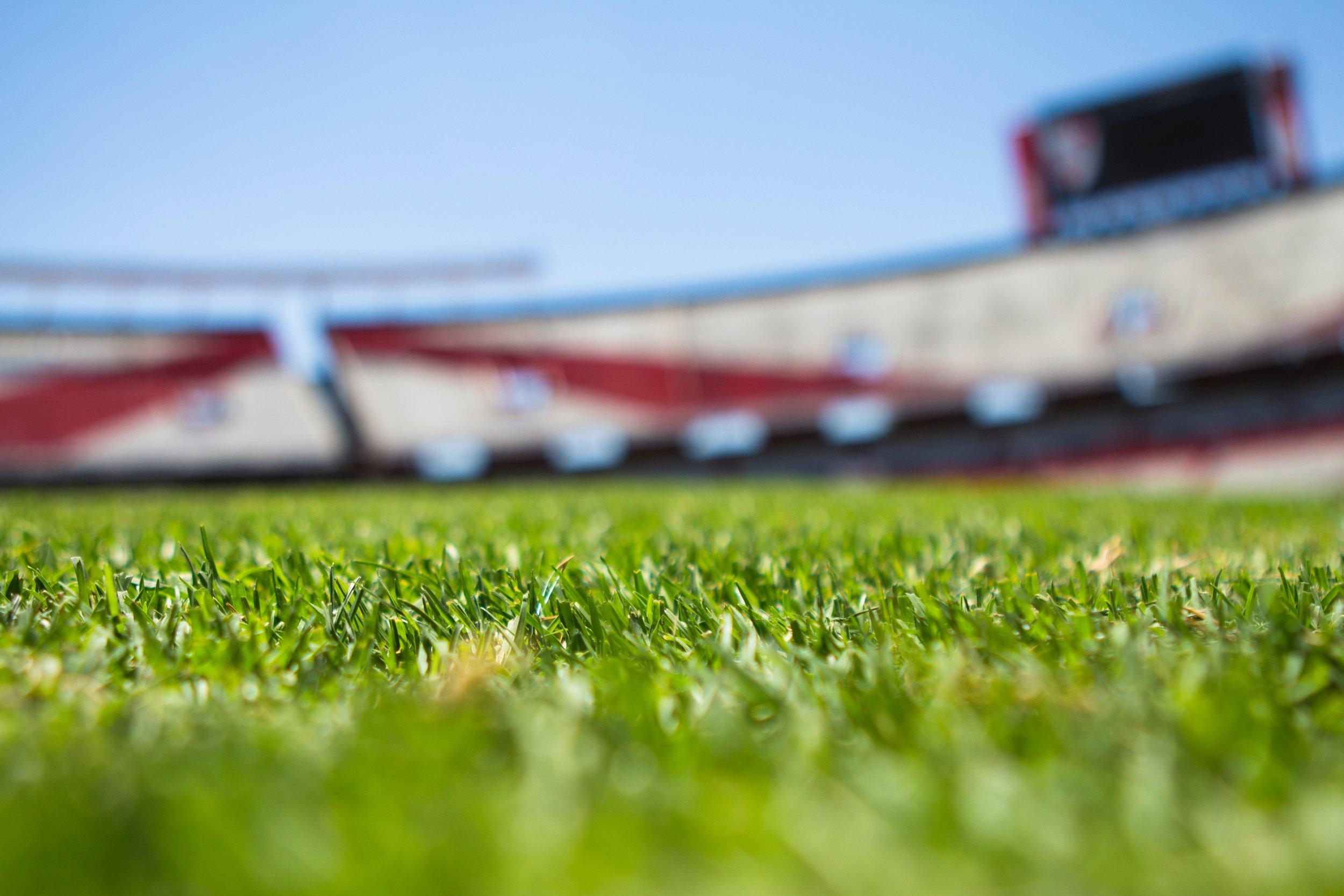 field-grass-green-61143.jpg