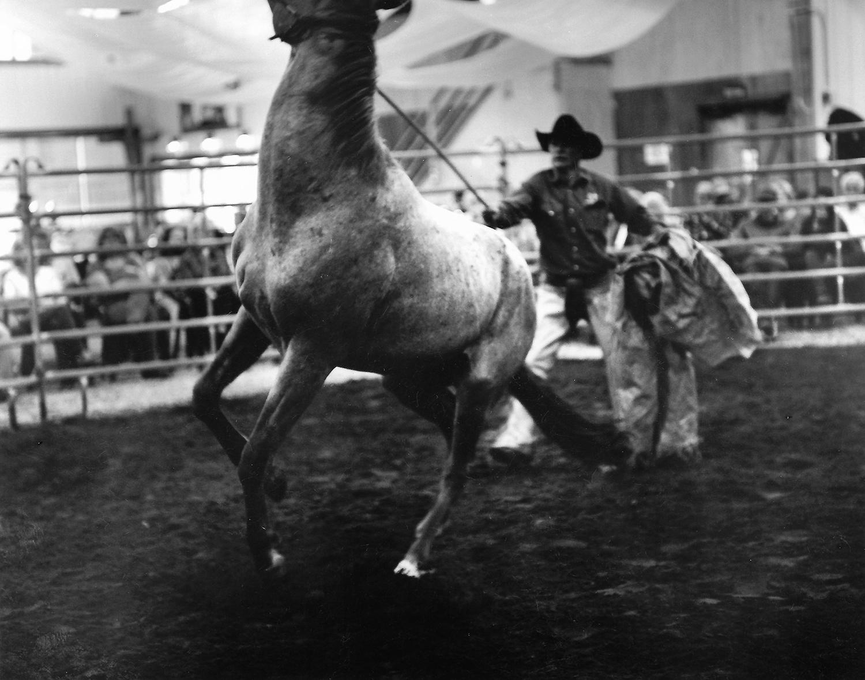 HORSE WHISPERING - LJHBvldfjbvkldjfb isufhg