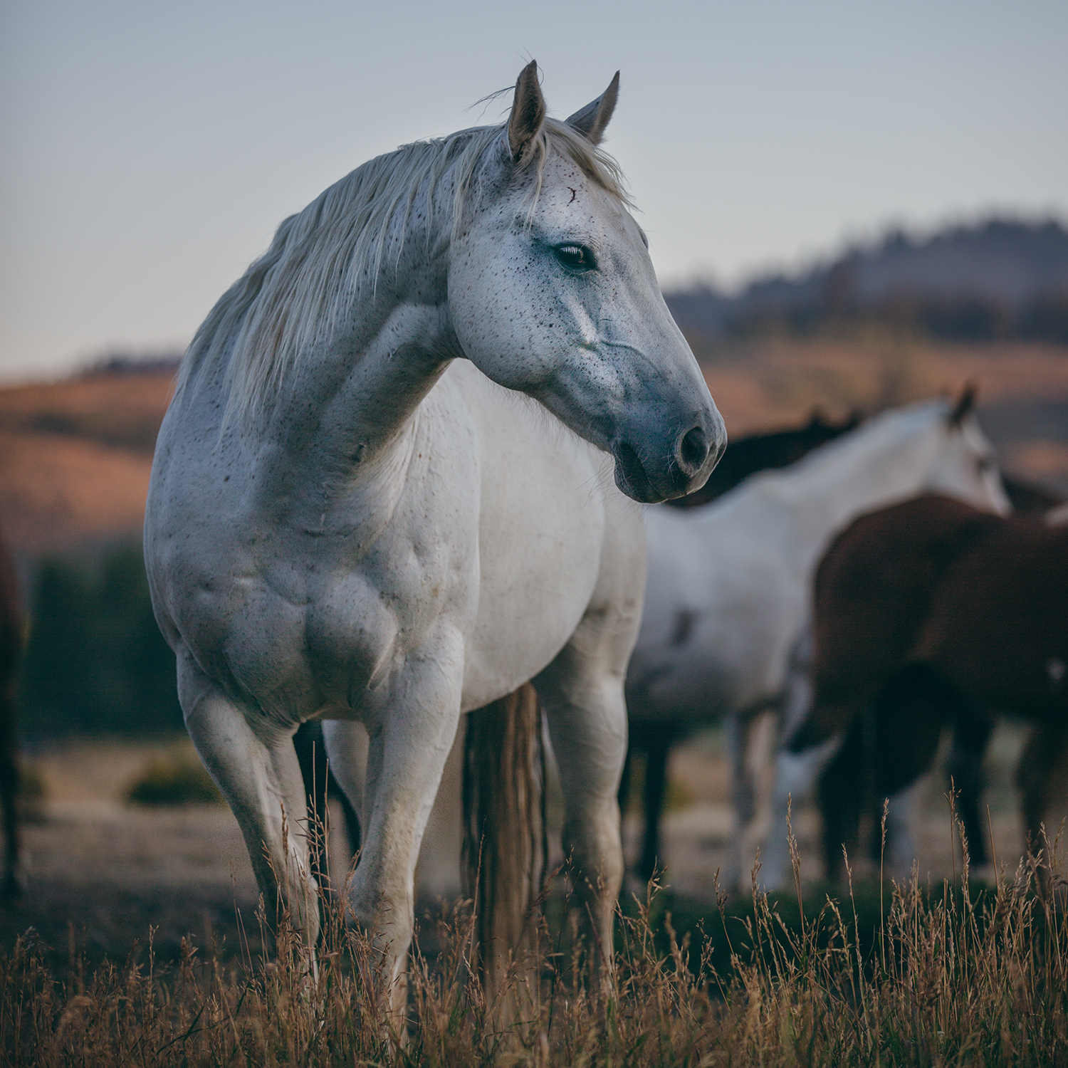 IN MANY CASES, THESE HORSES HAVE BEEN GIVEN UP ON AND WE ARE THEIR LAST HOPE -